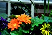 Flowers-2A