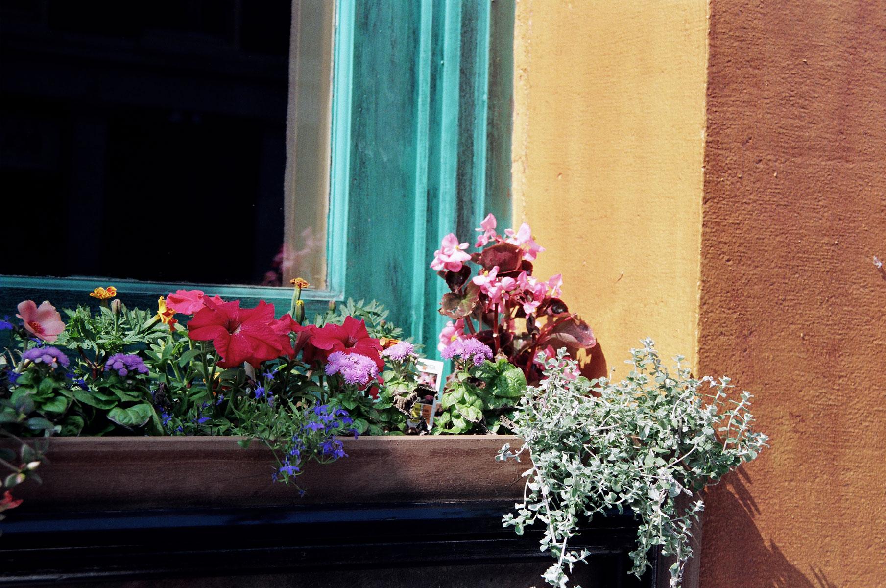 Window-of-Flowers