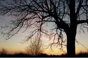 Tree-at-Sunset-716