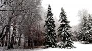 Winter-2015
