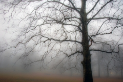 Tree-in-Fog-3
