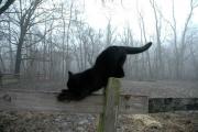 El-Gato-Negro