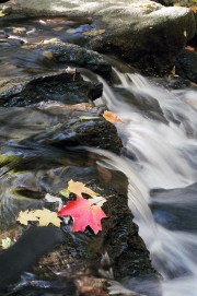 Leaves-In-Creek