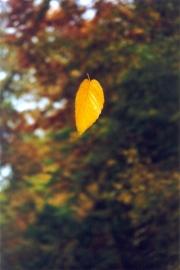 The-leaf-2
