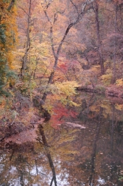 Wissahickon-Creek-1A
