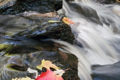 Leaves-In-Creek