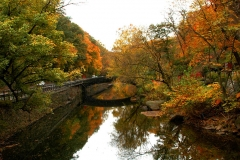 Wissahickon Valley-203