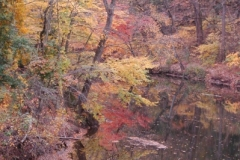 Wissahickon-Creek-1A